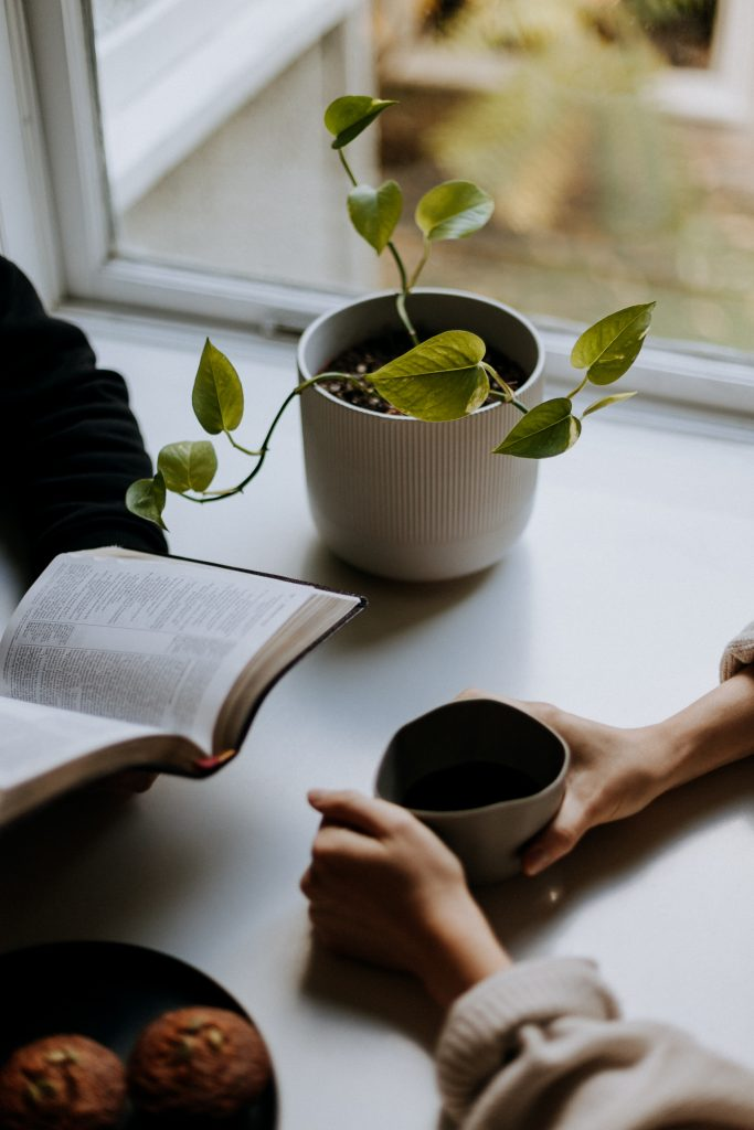 person reading book beside green plant in white ceramic pot